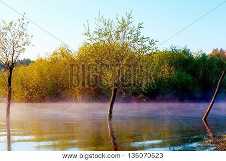 beautiful lake view in morning fog with mystic trees as leftovers of a mole