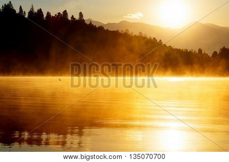 beautiful landscape with mountains and lake at dawn in golden and orange tones. Flying seagull over water
