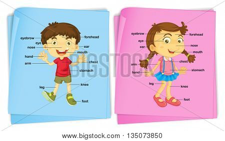 Boy and girl with different body parts