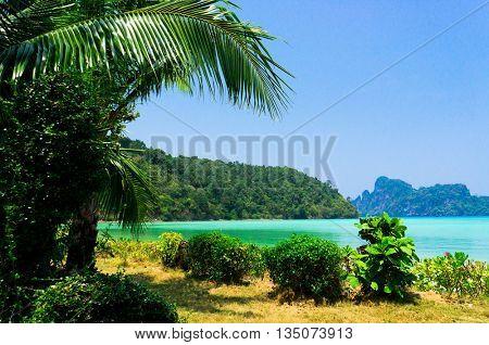 Palms Overhanging Idyllic Coast