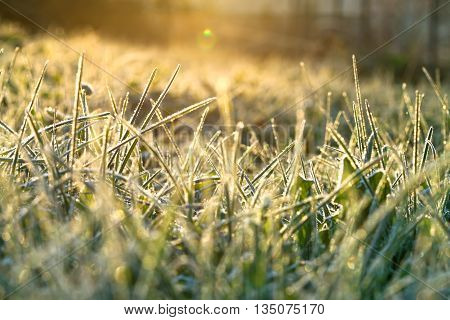 abstract background from a grass covered with hoarfrostsoft focus. rime on grass blur background. scene autumn meadow and sun shines. rural landscape with sunrise