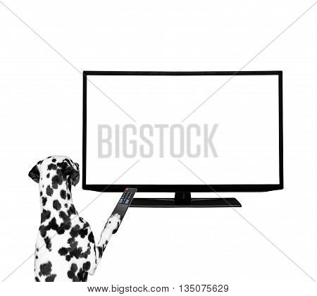 Dog watching television -- isolated on white