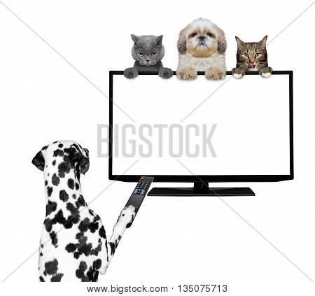 Dogs and cats watching television -- isolated on white