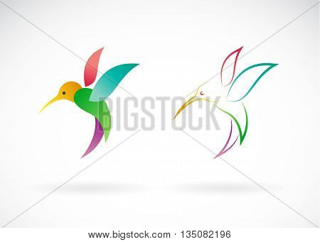 Vector image of an hummingbird design on white background / Vector Hummingbird for your desig.