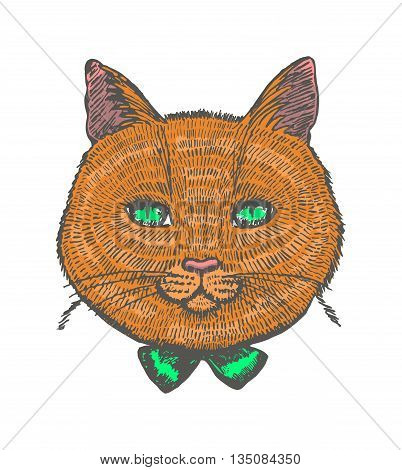 vector illustration of hand drawn ginger cat