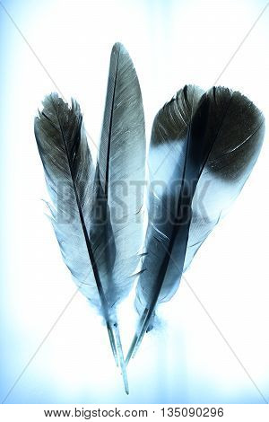 Abstract Bird Feathers with Blue Tint background