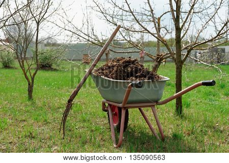 Wheelbarrow full of manure and pitchfork in garden