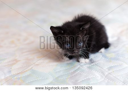 The frightened black kitten on the bed