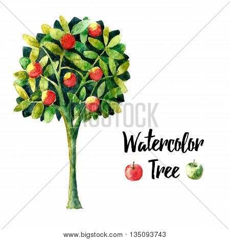 Realistic brush watercolor apple tree. Floral element apple tree for floral design. Realistic watercolor painting. Hand drawn illustration apple tree. vector