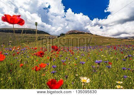 Castelluccio di Norcia, Umbria, Italy. The Village of Castelluccio and Pian Grande during the season of