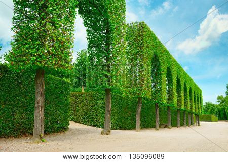 Decorative hedges in park and blue sky