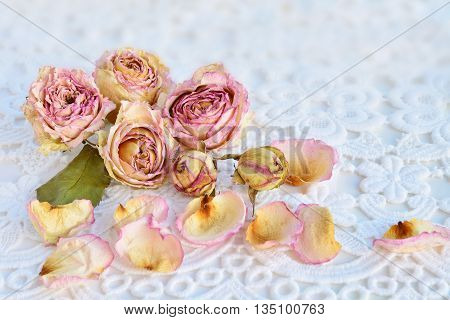 Dry pink roses over white lace background.