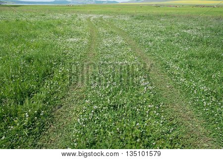 Rural road on a green flowering meadow on flat terrain. June 2016. Southern Siberia, Russia.