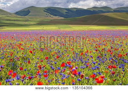 Castelluccio di Norcia, Umbria, Italy. The Village of Castelluccio and Pian Grande during the season of