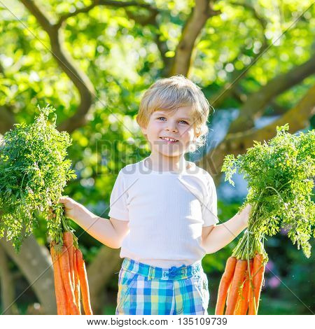 Adorable little kid boy with carrots in domestic garden. Child gardening and eating outdoors. Healthy organic vegetables for kids