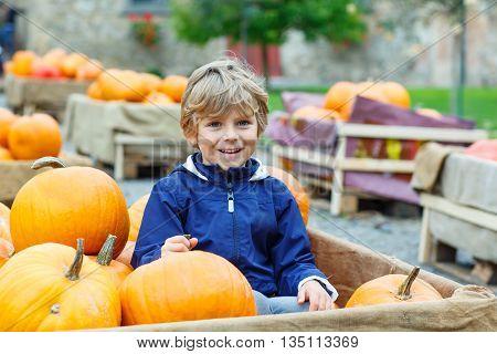 Beautiful happy little preschool kid boy on a pumpkin farm with huge vegetables. Child celebrating traditional festival halloween or thanksgiving.