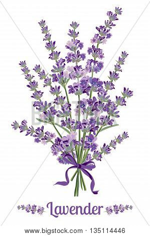 Beautiful bouquet of lavender flowers. Botanical illustrations are drawn by hand