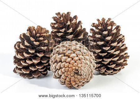 Studio Shot Cluster Of Four Old  Pine Cones