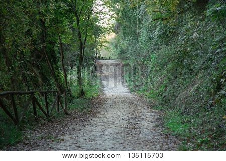 Shaded path that runs along the banks of the Tiber River