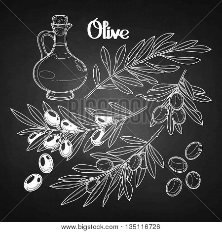Graphic olive collection. Olives on the branches. Olive oil in the glass bottle. Vector natural design on chalkboard