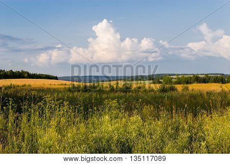 panoramic view of yellow field, forest and sky