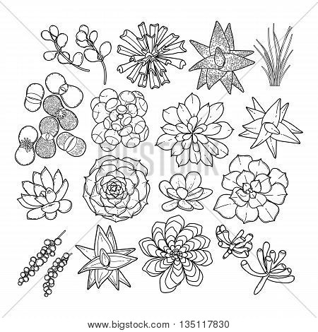 Graphic succulent collection isolated on white background. Coloring book page design for adults and kids