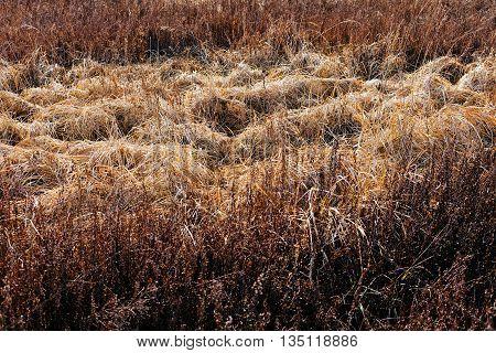 Dried Grass  In Autumn