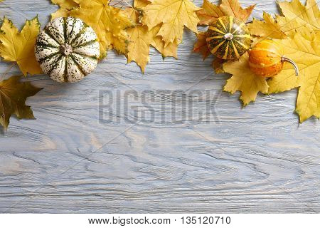 Autumn blue wooden background with ornamental pumpkins and yellow leaves