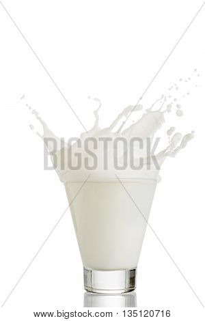 milk splash in glass isolated on white background.