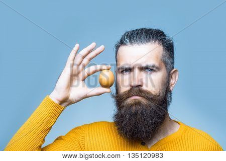 handsome bearded man with long lush beard and moustache on serious face holding egg in yellow shirt in studio on blue background