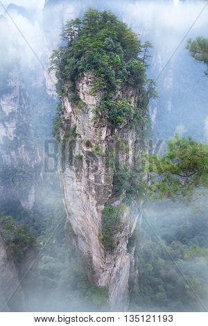 Zhangjiajie National Forest Park, set up in 1982, is the first authorized national forest park in China. The area covers 480 thousand square meters(185 square miles).