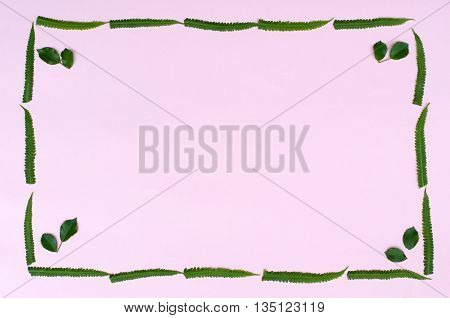 rectangular frame with green fern leaves on a pink paper background with space for inscription macro