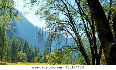 Idyllic in Yosemite Valley in Yosemite National Park in California view through a deciduous tree in autumn