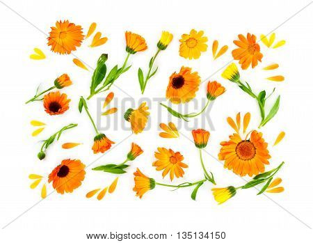 Flat Lay Composition With Flowers Calendula Isolated On White Background.