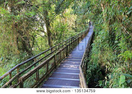 Argentina Jungle Hike