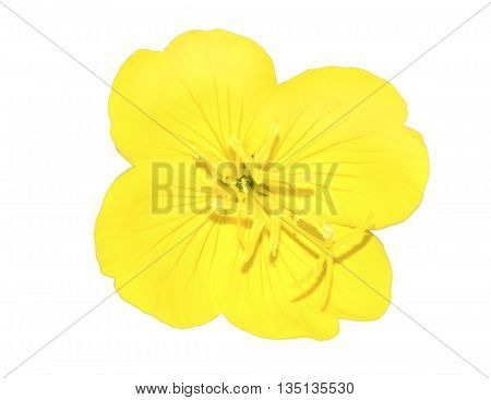bright yellow flower isolated on white background