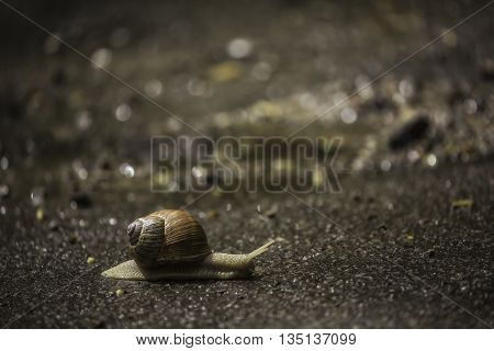 Big snail is on the forest road