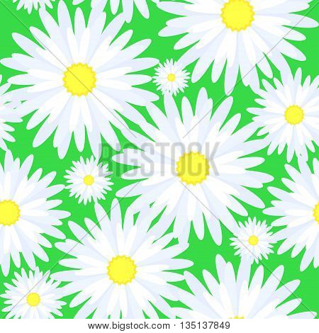 Seamless texture of flowers chamomile on green background