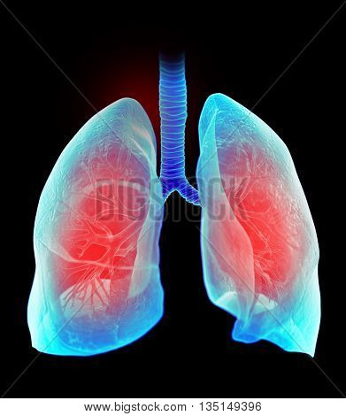 3d rendered, medically accurate 3d illustration of the highlighted human lung