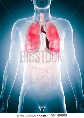 3d rendered, medically accurate 3d illustration of the human lung