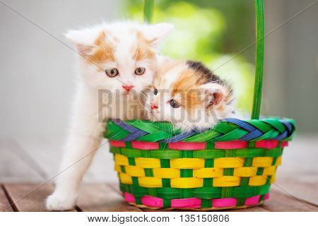 Kittens in basket on the street  in the sun shine day
