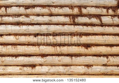 Close up of new log wall with moss insulation