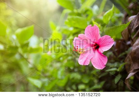 Tropical pink flower with green  leaf