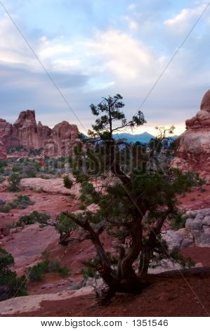 Juniper Tree At Sunrise