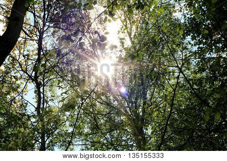 the sun breaks through the forest undergrowth
