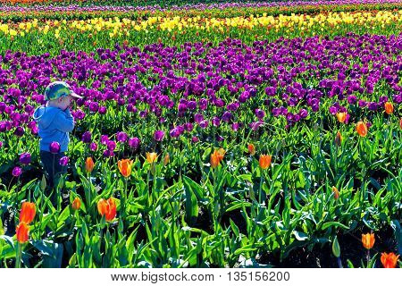 WOODBURN OR - MARCH 30: Young child in a tulip field in Woodburn OR on March 30 2016