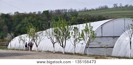 KAPUSTYNTSI - Chortkiv - Ukraine - April 20 2016. The appearance of greenhouses with polyethylene film to agribusinesses