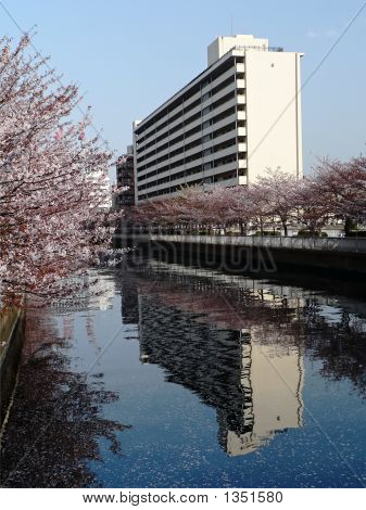 City Building Reflection In Spring