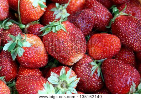 Scattering of dark red strawberry from the Russian giving