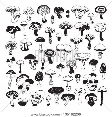 Set of vector hand-drawn doodles mushrooms. Icons isolated on white backgroun for recipes design menu packages. Vector design elements.